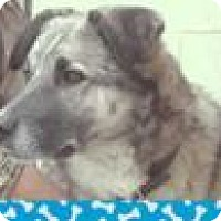Adopt A Pet :: KODA; Low fees, neutered - Red Bluff, CA