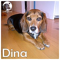 Adopt A Pet :: Dina - Pittsburgh, PA
