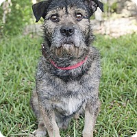 Adopt A Pet :: Scruffy - Homestead, FL