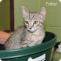 Adopt A Pet :: Fritter - Slidell, LA