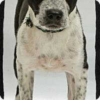 Adopt A Pet :: Eva - Old Saybrook, CT