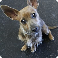 Adopt A Pet :: Geri - Rockwall, TX