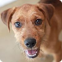 Adopt A Pet :: COPPER - Kyle, TX