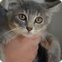 Adopt A Pet :: Stella - Danbury, CT