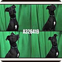 Adopt A Pet :: BALTO - St. Peters, MO