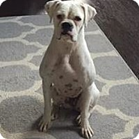 Adopt A Pet :: Snowglobe - Austin, TX