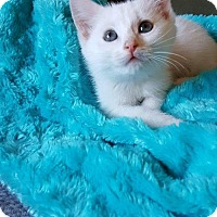 Adopt A Pet :: Otis - Florence, KY