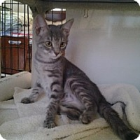 Adopt A Pet :: Sylvie - Middletown, CT