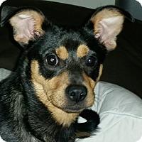 Adopt A Pet :: Sophie - Union City, TN