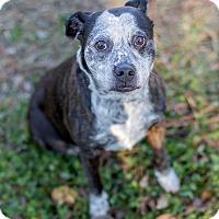 Adopt A Pet :: Sammie - Fayetteville, NC