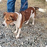 Adopt A Pet :: Bailey - Fredericksburg, VA