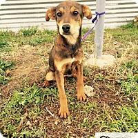 Adopt A Pet :: Skylar - DeForest, WI