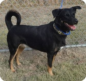 Shepherd (Unknown Type) Mix Dog for adoption in Olive Branch, Mississippi - Maggie