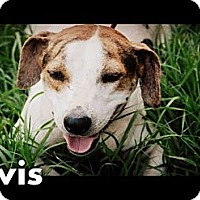 Adopt A Pet :: Elvis - Vancleave, MS
