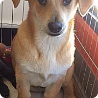 Adopt A Pet :: Kit - Santa Monica, CA