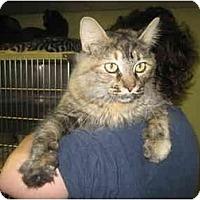Adopt A Pet :: Joanne Dean (Annie) - Lombard, IL