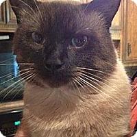 Adopt A Pet :: Hershey - Byron Center, MI