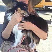 Adopt A Pet :: Tuxedo - La Habra, CA
