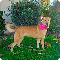 Adopt A Pet :: Beautiful Charly Girl-VIDEO - Los Angeles, CA
