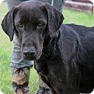 Adopt A Pet :: Maggie Sims~B Gentle girl