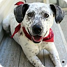 Adopt A Pet :: Benny (fka Luther) NEEDS FOSTER