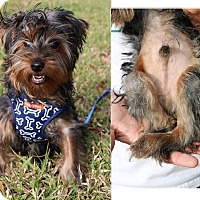 Adopt A Pet :: Toby - Clearwater, FL