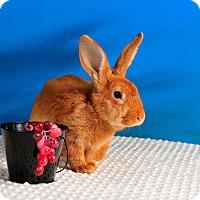 Adopt A Pet :: Brooke - Marietta, GA