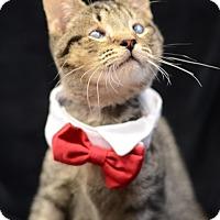Adopt A Pet :: Richard151823 - Atlanta, GA