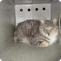 Adopt A Pet :: FERAL GAZELLE - Reno, NV