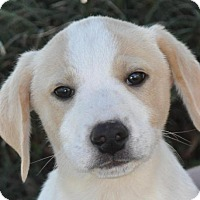 Adopt A Pet :: River - Atlanta, GA