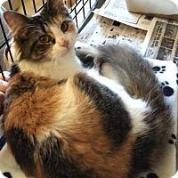 Adopt A Pet :: Betsy - Jefferson, NC
