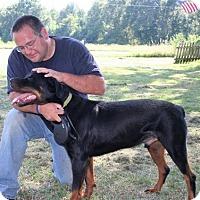 Adopt A Pet :: AJ-NEW VIDEO!! - Holly Hill, SC