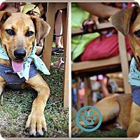 Adopt A Pet :: Ally - Kimberton, PA