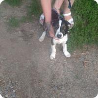 Adopt A Pet :: Gator - Kendall, NY