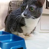 Domestic Shorthair Cat for adoption in Parkton, North Carolina - Eerie