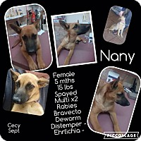 Shepherd (Unknown Type) Mix Dog for adoption in Denver, Colorado - Nany