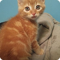 Adopt A Pet :: Pumpkin - Bryson City, NC