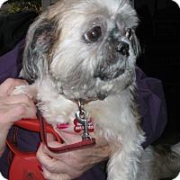 Adopt A Pet :: Esther - Salem, OR