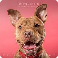 Adopt A Pet :: Tyson - Sheboygan, WI