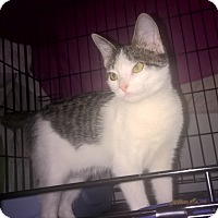 Adopt A Pet :: Gracie - Highland, IN