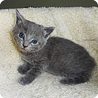 Adopt A Pet :: Johnny - N. Billerica, MA
