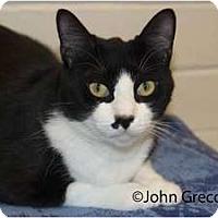 Adopt A Pet :: Sparky - New Port Richey, FL