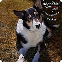 Adopt A Pet :: Tucker - Tempe, AZ