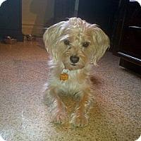Adopt A Pet :: Charlie - Vaudreuil-Dorion, QC