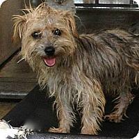 Adopt A Pet :: Isaac - Milan, NY