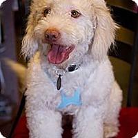 Adopt A Pet :: Deston - Orange, CA