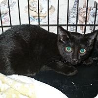 Adopt A Pet :: Merle - Colmar, PA