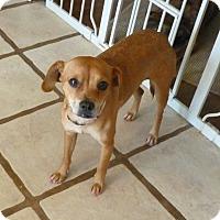 Adopt A Pet :: SOFIA - Paron, AR