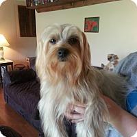 Adopt A Pet :: Princess Blossom - Huntsville, TN