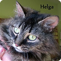 Adopt A Pet :: Helga - Warren, PA